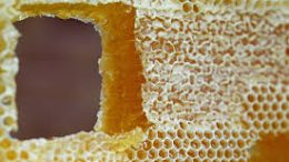miel breton et ces avantages